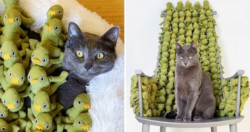 藍貓被青蛙圍住「睜大眼睛」覺得怕 一臉超嫌表情:快給朕拿走這些東西