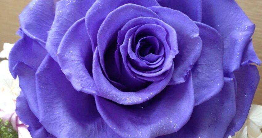 想種看看玫瑰花嗎?種出苗後該怎麼維護?進來看有詳細的圖文和影片教學