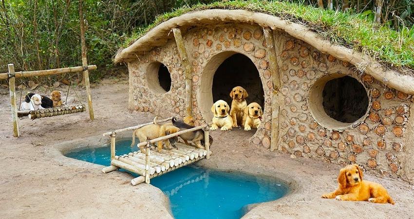 救下7隻奶汪…神人徒手為牠們「蓋出狗豪宅」 還附奢華骨頭型泳池!