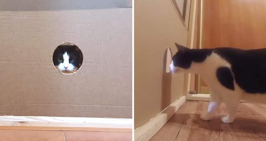 貓果然是水做的? 鏟屎官實測「貓能過多小的洞」驚奇驗證:貓體力學