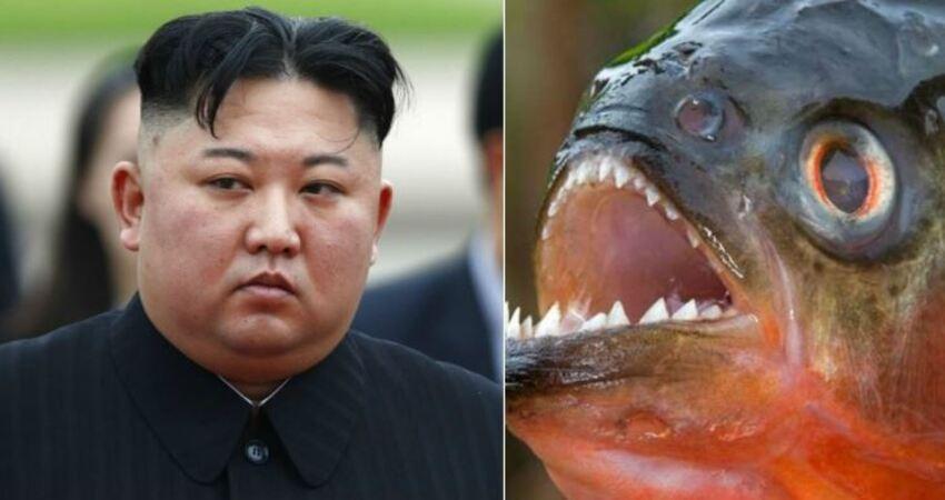 北韓到底有多恐怖?金正恩最新「殘酷處決方法」竟是把OO餵食人魚吃…慘不忍睹