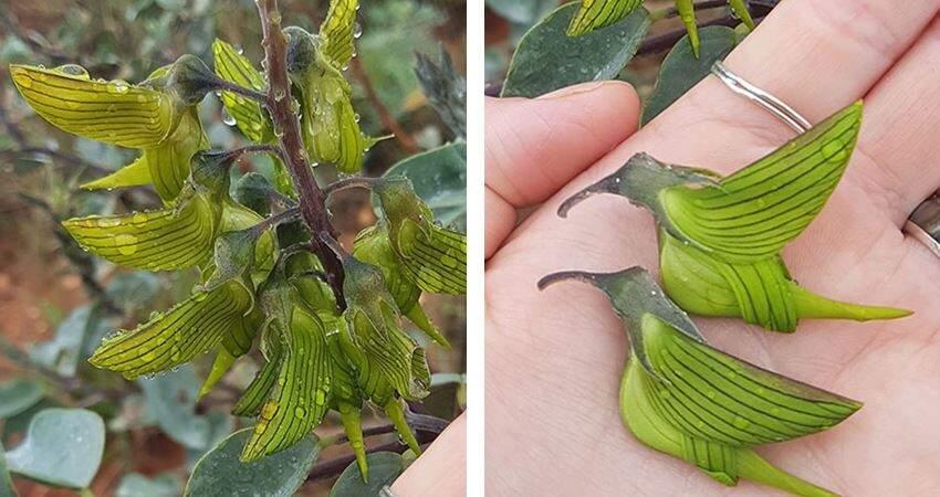一片片在飛舞!奇特花卉「長成了蜂鳥」 專家:自然界的美麗巧合