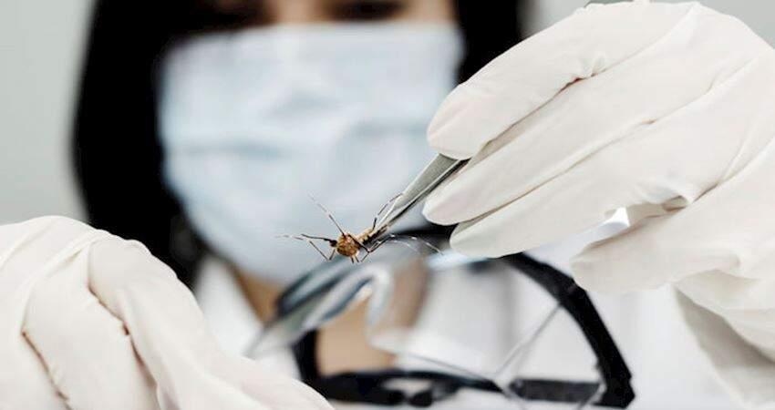 美國批准釋放「基因改造蚊子」 爭議實驗引發反彈:根本是侏羅紀公園翻版!