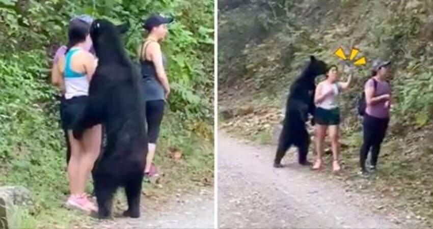 短褲妹爬山遇黑熊! 湊近狂嗅還咬腿…她竟肥膽「拿出手機自拍」