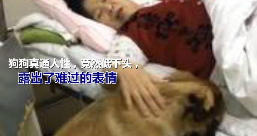 狗狗混進病房,看望生病的奶奶,低頭悶悶不樂,網友:懂事的狗狗