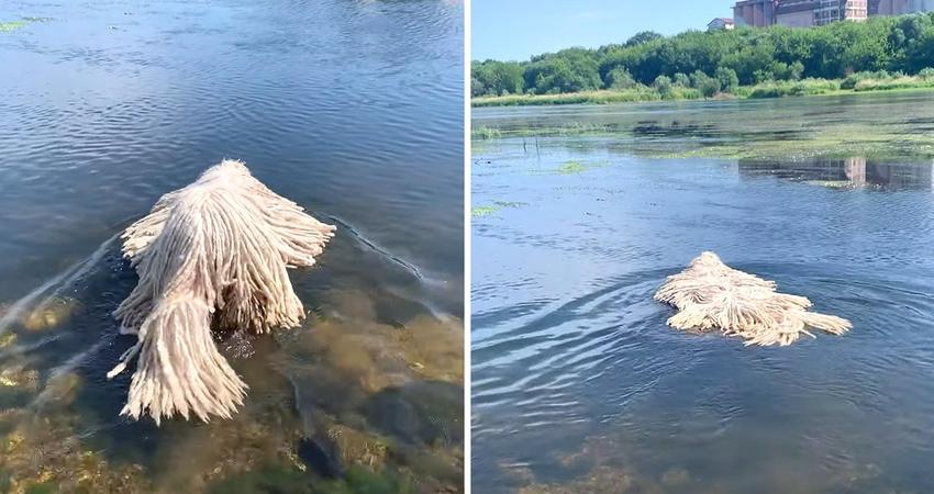 湖中怎麼有拖把在漂? 超萌「抹布犬」在水中太像洗拖把啦~