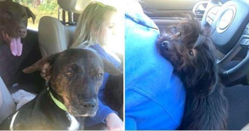 去收容所領養一隻汪… 她回程卻「載了一車狗狗」超開心:賺到了!