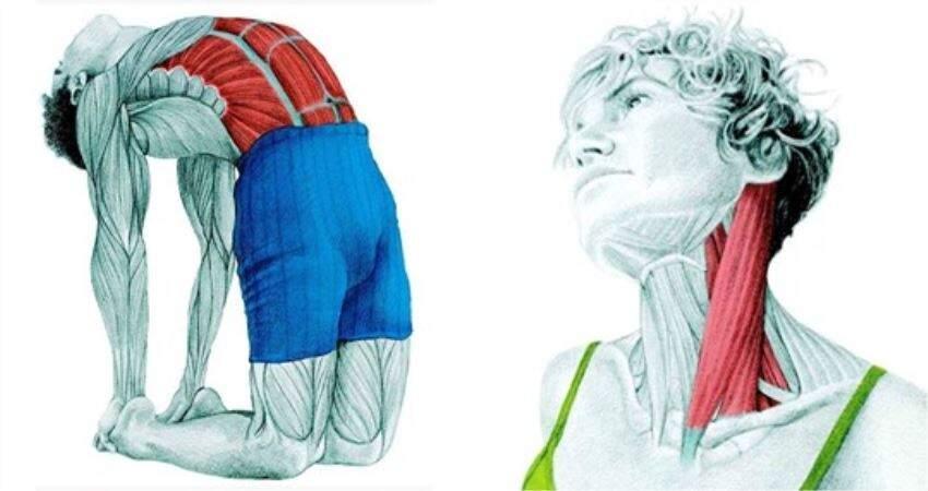 哪裡痠就拉哪裡~ 34張「拉筋肌肉解析圖」全方位鍛鍊身體肌肉