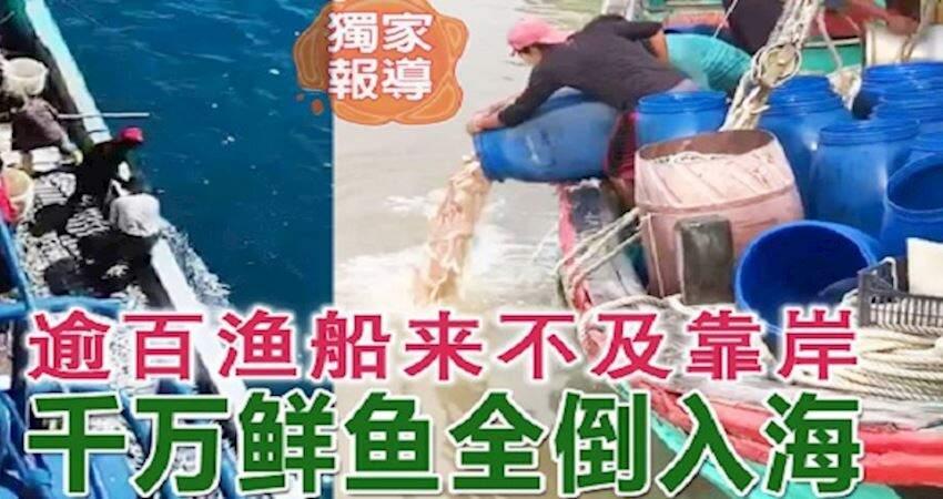 ◤行動管制14天◢逾百漁船來不及靠岸千萬鮮魚全倒入海
