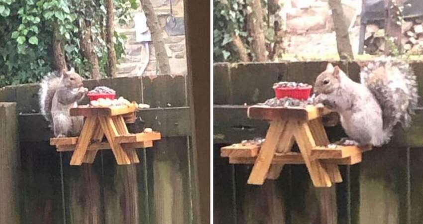 他在後院放上迷你小餐桌招待 「呆萌小客人」來用餐網友都被萌化了