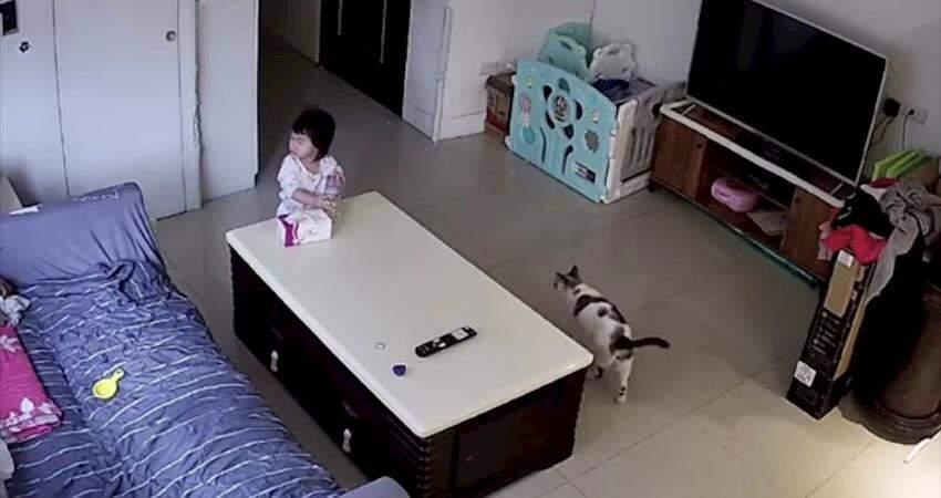透過監視器看到小孩跌倒,覺得姿勢很怪感覺是從背後被人推倒....但是現場除了小孩沒有別人!