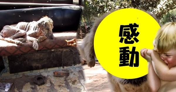 這隻感染疥癬的流浪狗讓人看得好心疼 但在6個星期後...牠竟然大變身!讓所有人都感動得哭了!