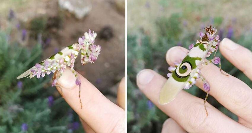 女子在花園發現童話裡的生物 「薰衣草身體」美到讓人直盯著看
