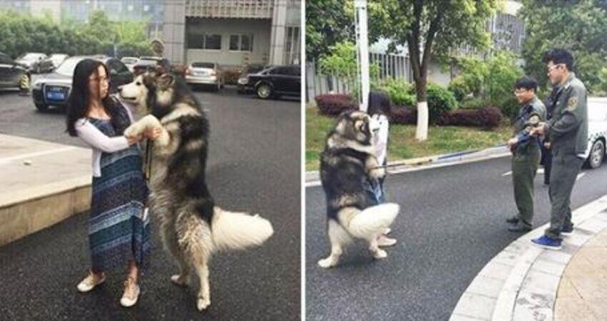 「妳就是我馬麻對不對~」 阿拉「熊抱」路人妹 警察到場勸說也無效