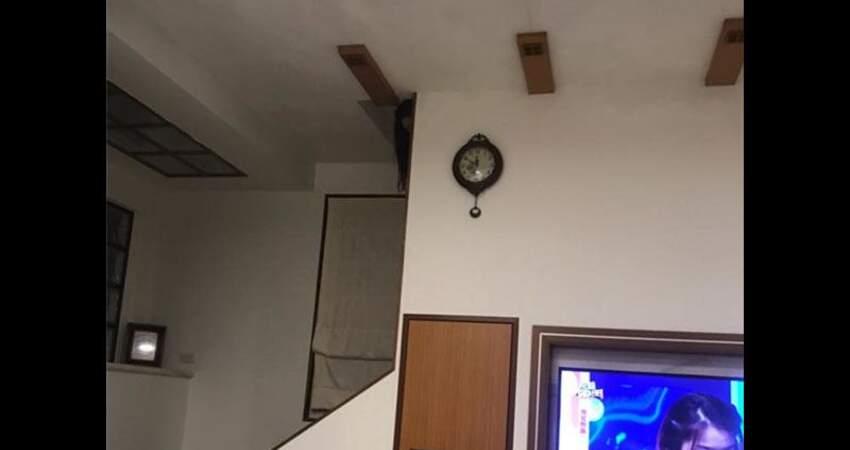 深夜看電視驚見長髮女鬼「女友有這麼高嗎?」頓時嚇到不敢睡覺...網友推測這角度真的不合理!