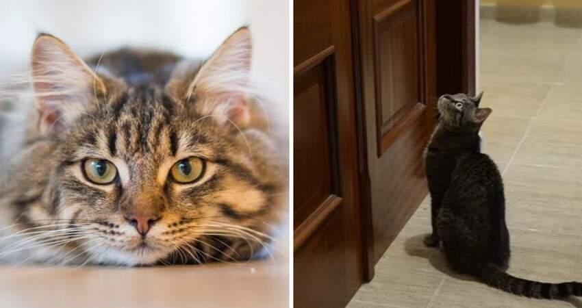 不只是想念…動物心理揭「貓貓等門5原因」 沒迎接並不是討厭你