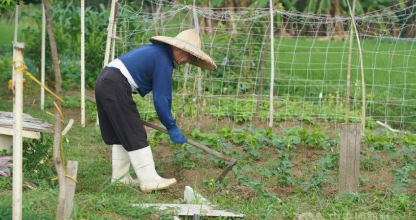 農民有退休金了!35年提繳10%可月領3.7萬