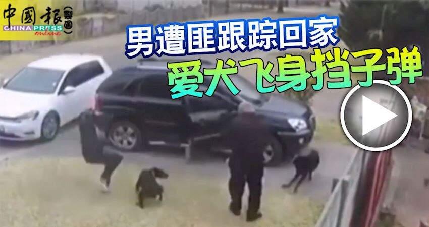 男遭匪跟蹤回家愛犬飛身擋子彈