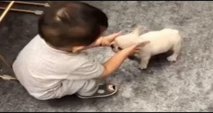 小寶寶第一次邂逅小狗狗!「輕抬臉蛋深情凝視」:我們怎麼長的這麼像! 狗狗可愛