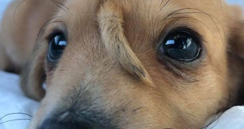 美國最酷小狗 額頭上尾巴讓牠一夕爆紅
