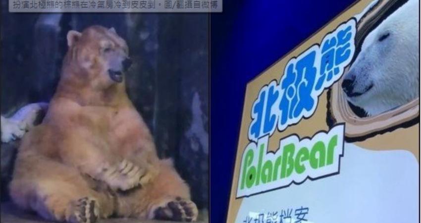 史上最狂替身!棕熊代班北極熊 冷到凍末