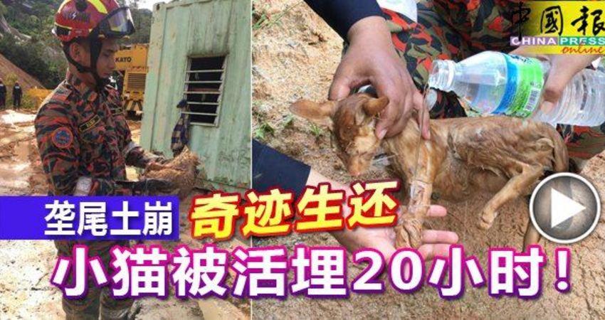 (有視頻看)檳城壟尾土崩‧奇跡生還-小貓被活埋20小時!
