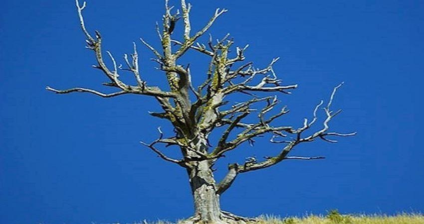 心理測試:哪棵樹會長出新芽,測出你在多少歲才會顯老?