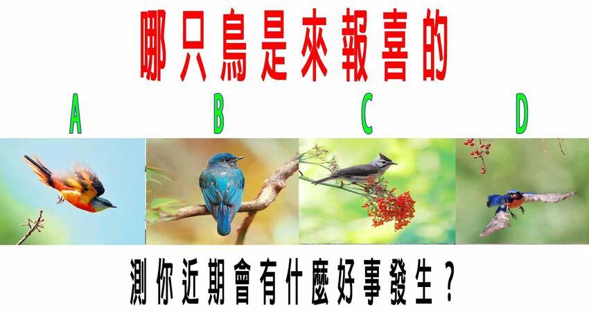 心理測試:哪只鳥是來報喜的?測你近期會有什麼好事發生?