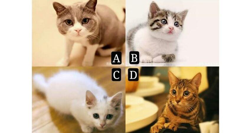 選擇一隻小貓,測你是會擁有事業還是美好家庭?