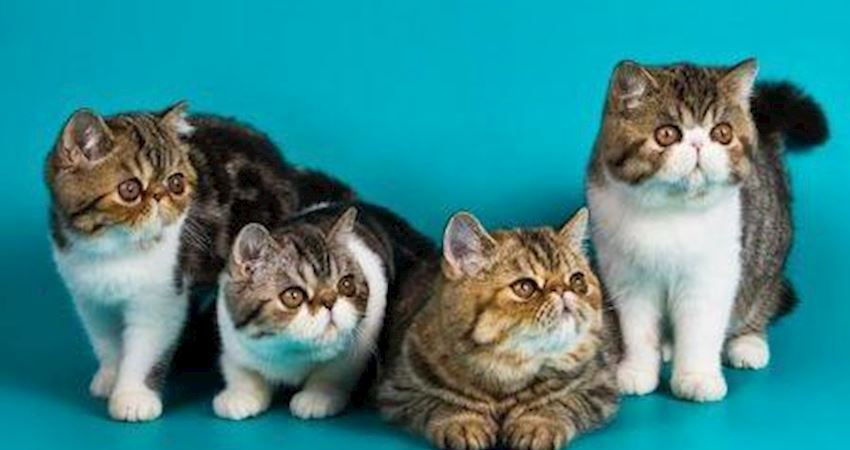 心理測試:選一隻貓咪領養,你會選哪只?測你明年會遇到什麼貴人