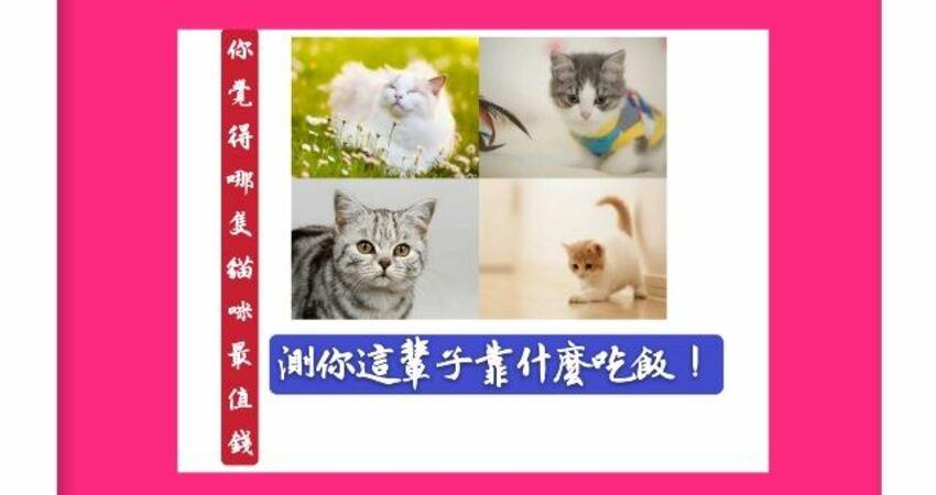 你覺得哪隻貓咪最值錢?測你這輩子靠什麼吃飯!