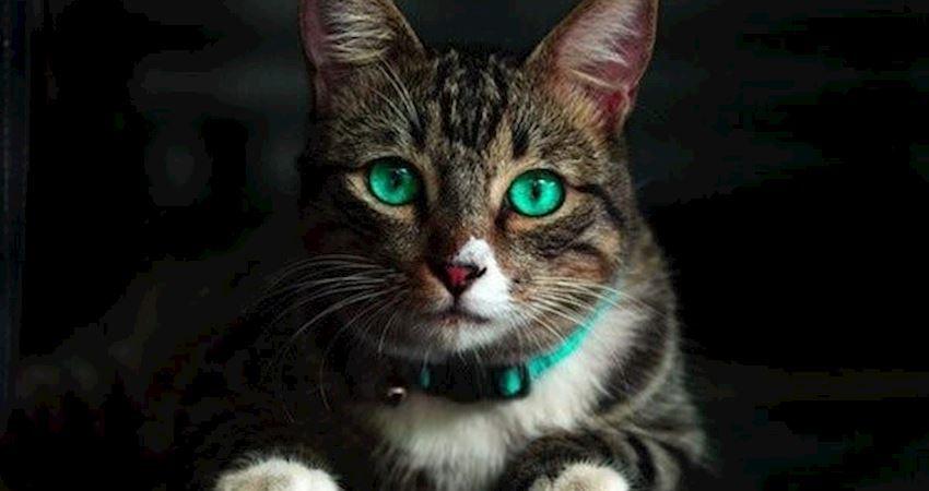 心理測試:4隻貓咪,你最喜歡哪只?秒測你隱藏的心機有多重?
