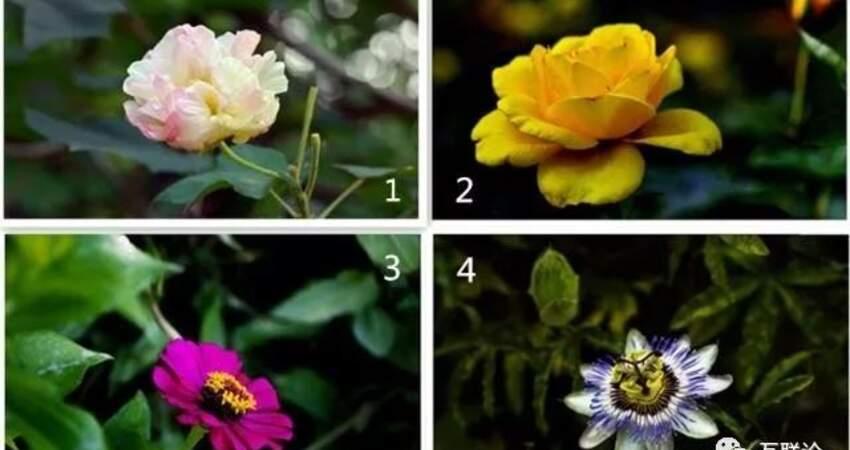 憑第一反應選一朵鮮花,測你在乎的人心裡是不是也有你