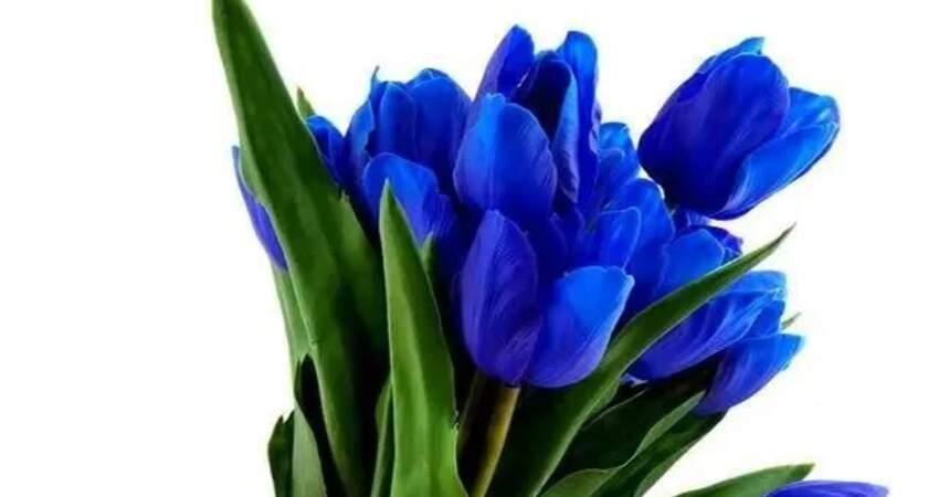 心理測試:你第一眼喜歡哪束花,測出你這輩子總是跟誰糾纏不清