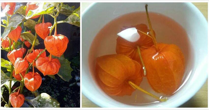 有一種水果,叫菇娘,,既當水果又當藥,下火消暑、清咽利嗓,治療咳嗽都是很好的