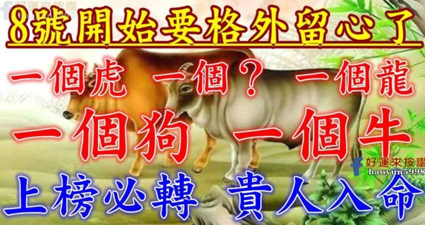 8號開始要格外留心了,一個虎,一個?一個龍,一個狗,一個牛上榜必轉