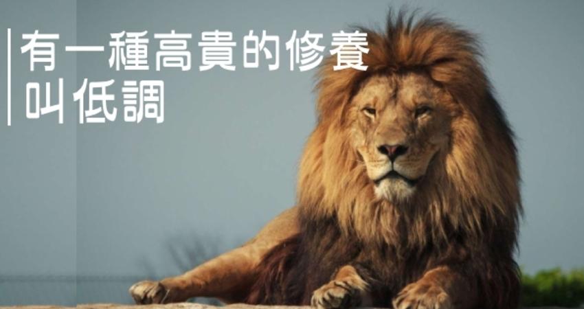 如果你是獅子,何須炫耀?夠強的人,想藏都藏不住,還怕人家不知道嗎...