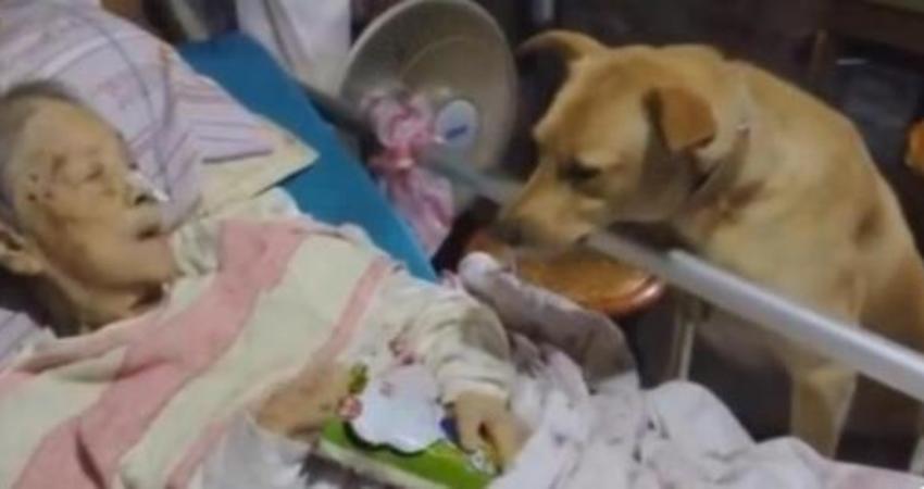 這個七旬老阿嬤讓大家都覺得「養小孩不如養狗」,她住院後就只有一隻土狗陪伴在身邊…
